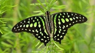 colorful-butterflies-wallpaper-collection-series-two-13
