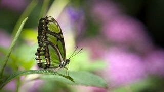 colorful-butterflies-wallpaper-collection-series-two-14