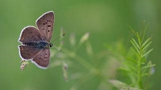 colorful-butterflies-wallpaper-collection-series-two-03