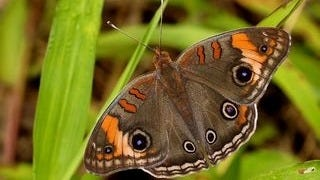 colorful-butterflies-wallpaper-collection-series-two-04