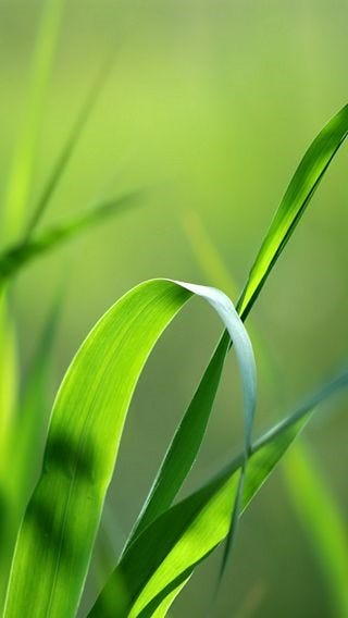 fields-of-grass-wallpaper-collection-for-iphone-series-one-03