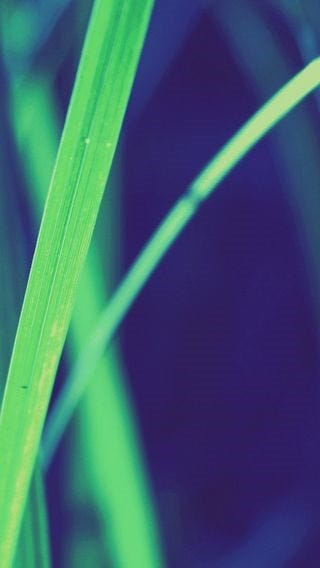 fields-of-grass-wallpaper-collection-for-iphone-series-one-04