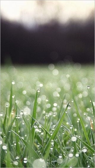fields-of-grass-wallpaper-collection-for-iphone-series-one-06