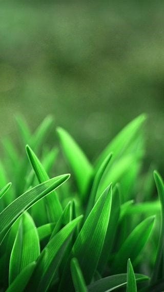 fields-of-grass-wallpaper-collection-for-iphone-series-one-11