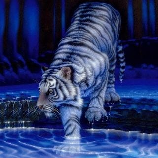 tigers-wallpaper-collection-for-ipad-series-one-09