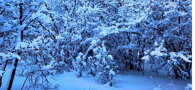 winter-wonderland-wallpaper-collection-for-your-iphone-series-one-00