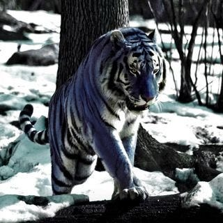 tigers-wallpaper-collection-for-ipad-series-one-06
