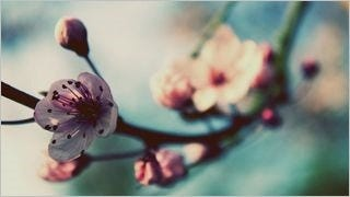 spring-blossoms-wallpaper-collection-bonus-size-06