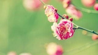 spring-blossoms-wallpaper-collection-bonus-size-09