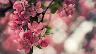 spring-blossoms-wallpaper-collection-bonus-size-10