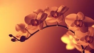 spring-blossoms-wallpaper-collection-bonus-size-11