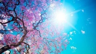 spring-blossoms-wallpaper-collection-bonus-size-16