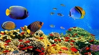 life-in-the-coral-reefs-wallpaper-collection-series-two-02