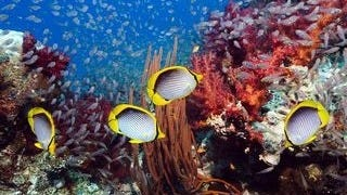 life-in-the-coral-reefs-wallpaper-collection-series-two-05