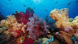 life-in-the-coral-reefs-wallpaper-collection-series-two-06