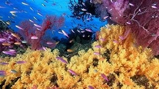 life-in-the-coral-reefs-wallpaper-collection-series-two-07