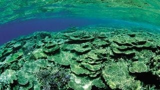 life-in-the-coral-reefs-wallpaper-collection-series-two-14