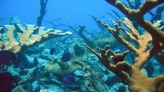 life-in-the-coral-reefs-wallpaper-collection-series-two-16