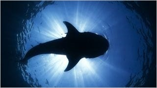 sharks-of-the-deep-wallpaper-collection-series-one-03