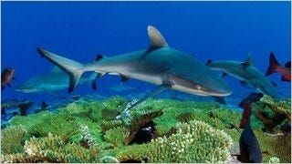 sharks-of-the-deep-wallpaper-collection-series-one-05