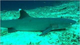 sharks-of-the-deep-wallpaper-collection-series-one-08
