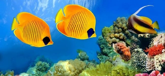 life-in-the-coral-reefs-wallpaper-collection-series-two-00