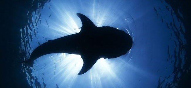 sharks-of-the-deep-wallpaper-collection-series-one-00
