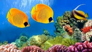 life-in-the-coral-reefs-wallpaper-collection-series-two-01