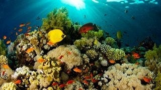 life-in-the-coral-reefs-wallpaper-collection-series-two-03