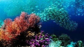 life-in-the-coral-reefs-wallpaper-collection-series-two-04
