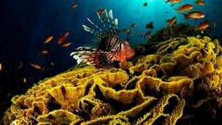 life-in-the-coral-reefs-wallpaper-collection-series-two-08