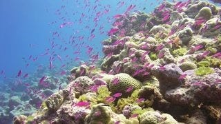 life-in-the-coral-reefs-wallpaper-collection-series-two-09