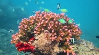life-in-the-coral-reefs-wallpaper-collection-series-two-10