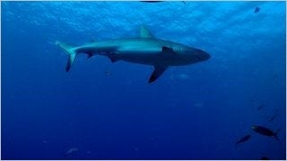 sharks-of-the-deep-wallpaper-collection-series-one-12