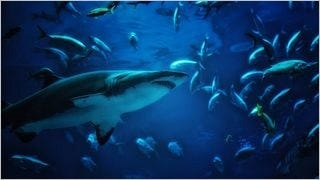 sharks-of-the-deep-wallpaper-collection-series-one-16