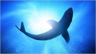 sharks-of-the-deep-wallpaper-collection-series-one-02