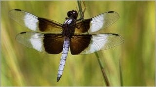 dragonflies-wallpaper-collection-series-one-06