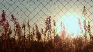 fences-wallpaper-collection-series-one-03