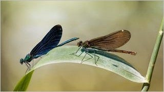 dragonflies-wallpaper-collection-series-one-03