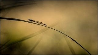 dragonflies-wallpaper-collection-series-one-04