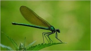 dragonflies-wallpaper-collection-series-one-12