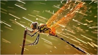 dragonflies-wallpaper-collection-series-one-16
