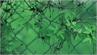 fences-wallpaper-collection-series-one-01