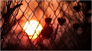 fences-wallpaper-collection-series-one-04