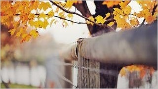 fences-wallpaper-collection-series-one-08