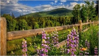 fences-wallpaper-collection-series-one-11