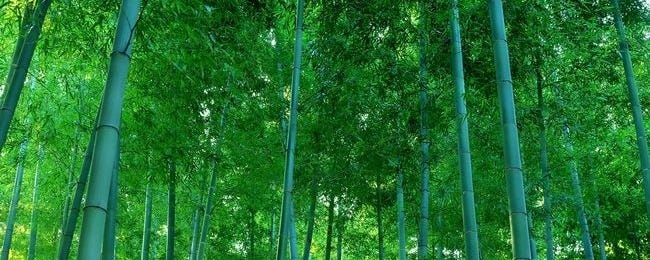 forests-wallpaper-collection-for-nexus-seven-series-one-00