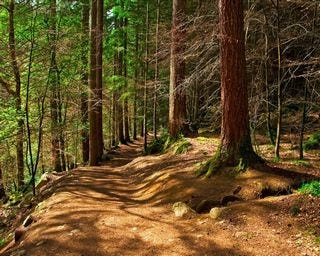 forests-wallpaper-collection-for-nexus-seven-series-one-03
