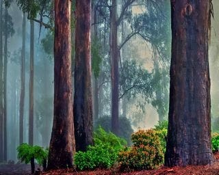 forests-wallpaper-collection-for-nexus-seven-series-one-04