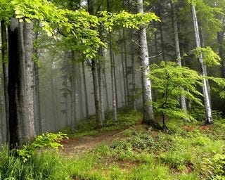 forests-wallpaper-collection-for-nexus-seven-series-one-05